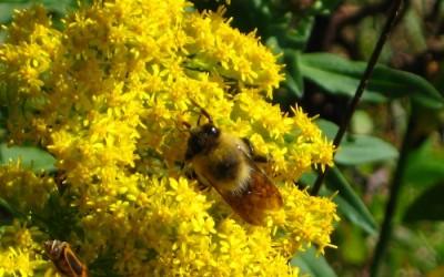 Humming Bee Breath (Bhramari Pranayama)