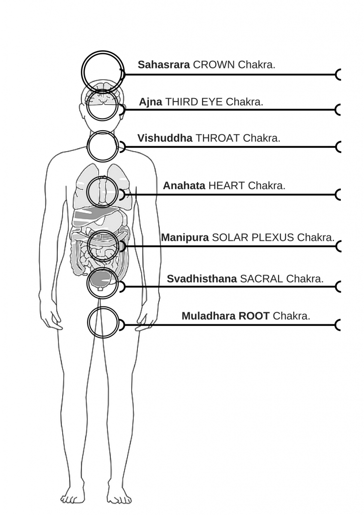 Nice Anatomy Solar Plexus Embellishment - Anatomy And Physiology ...